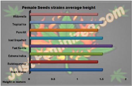 Female Cannabis Strains